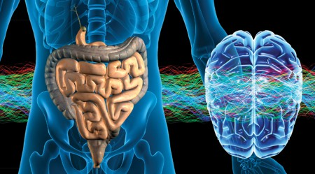 gut-brain